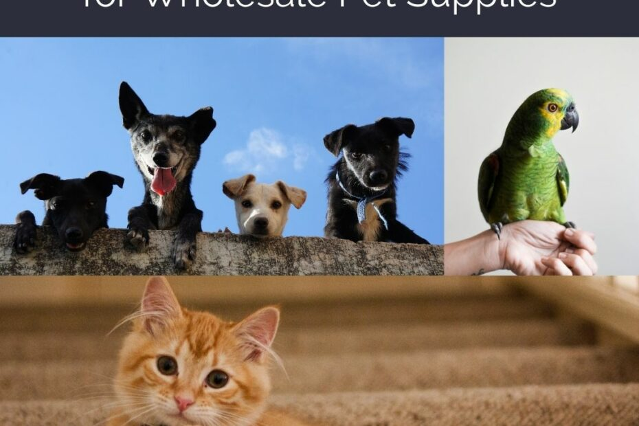 Free List of 15 Dropship Suppliers for Wholesale Pet Supplies